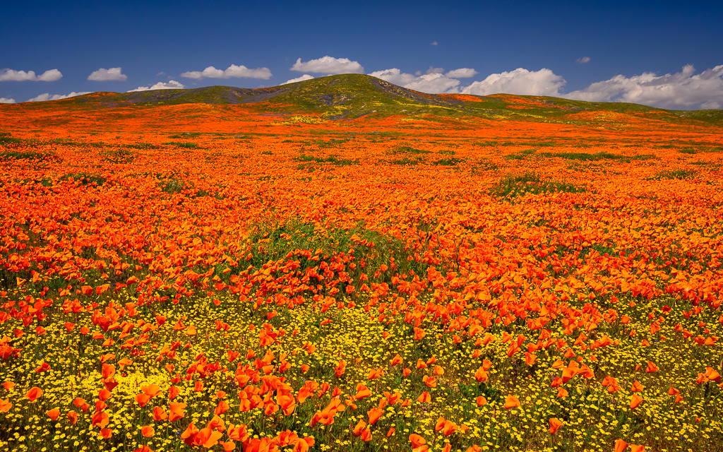 MAB-20190402-CA-ANTELOPE-VALLEY-POPPIES-70125.jpg