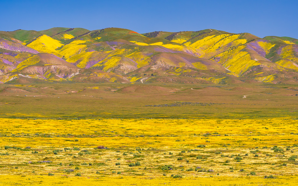 MAB-20190410-CA-CARRIZO-PLAIN-WILDLOWERS-71945.jpg