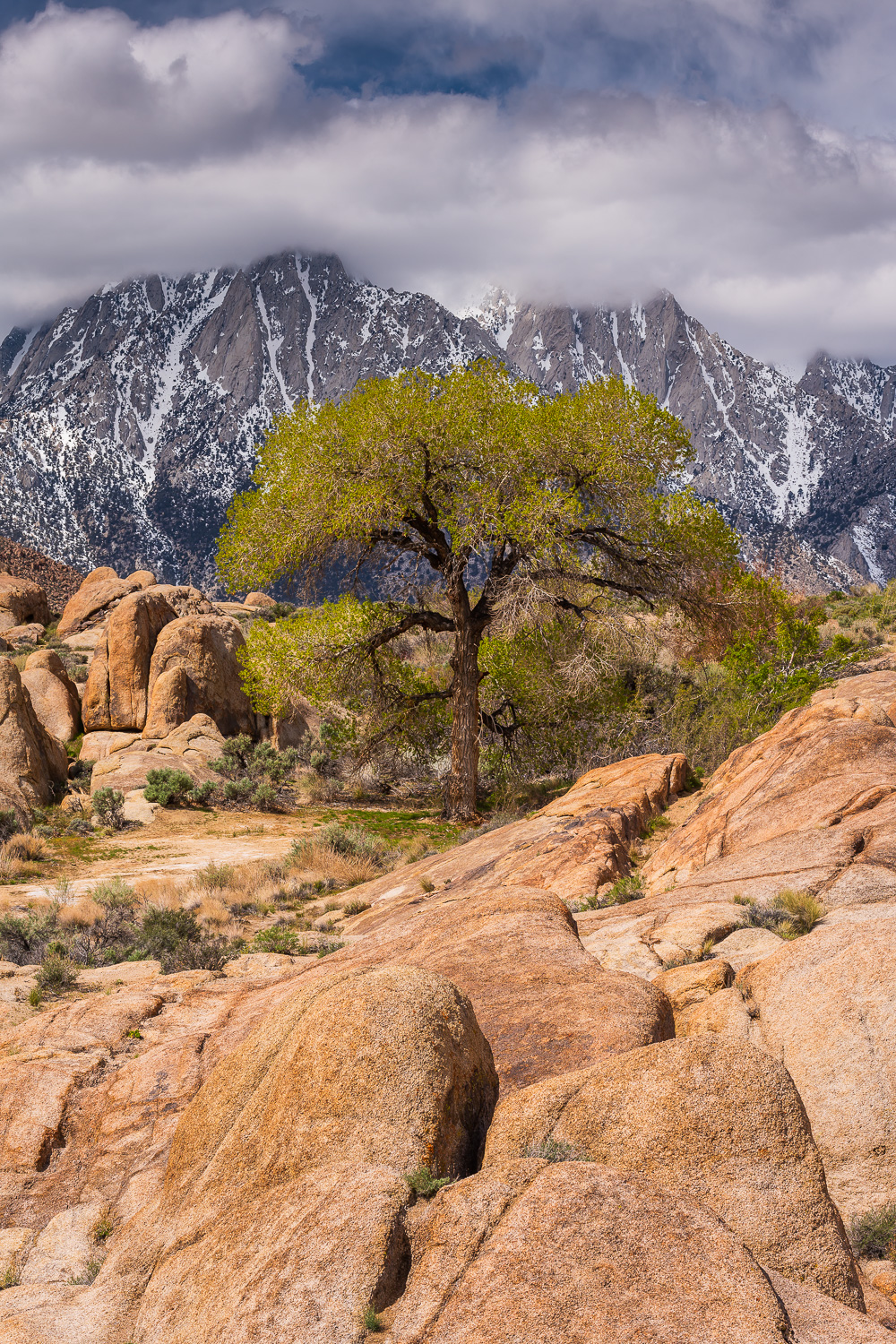 MAB-20190404-CA-ALABAMA-HILLS-TREE-70527.jpg